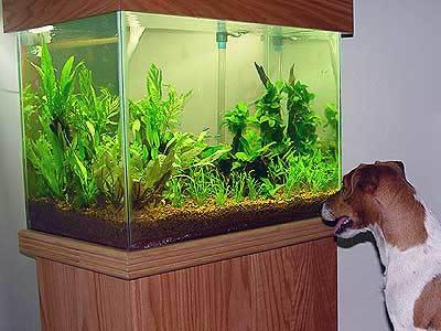 Tropical Aquatic and marginal Aquarium Plants
